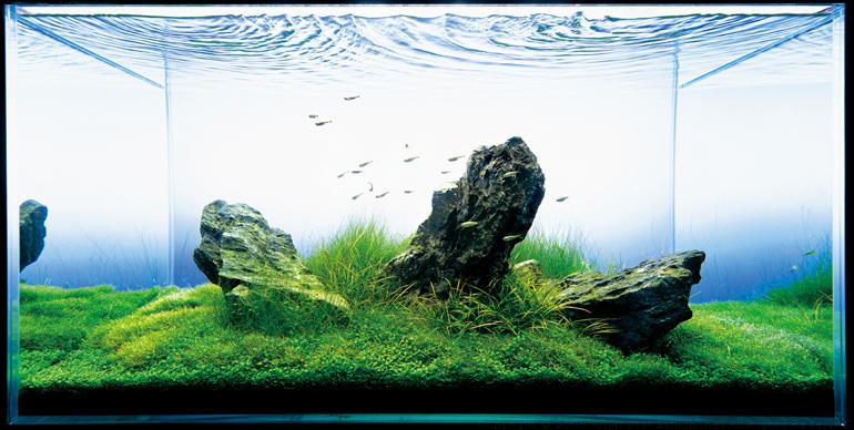Anyone else have an aquarium? - Page 3 - Pets